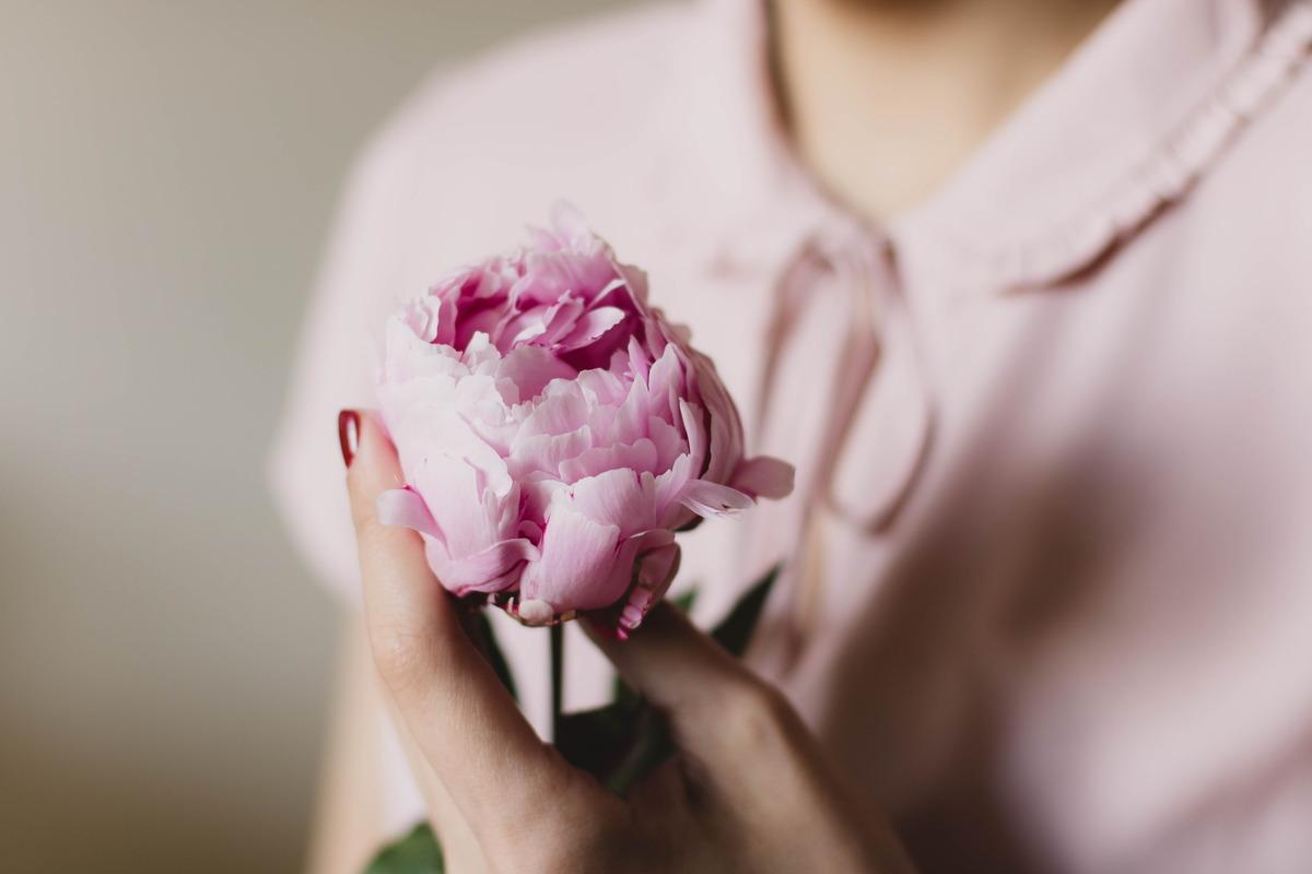 różowy kwiat piwonii